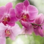 Черновчанам на фотовыставке показали орхидеи, занесенные в Красную книгу